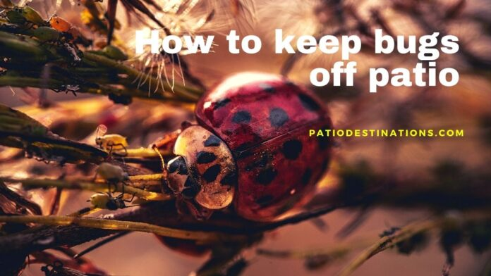 how to keep bugs off patio