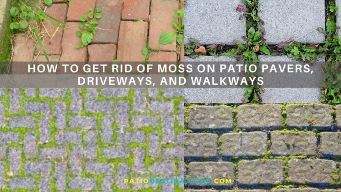 how to get rid of moss on patio pavers